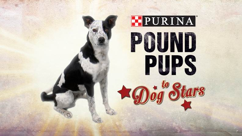 Purina Pound Pups to Dog Stars