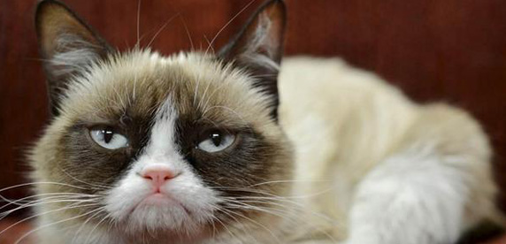Grumpy Cat holds # 1 position in 'FRISKIES 50' list